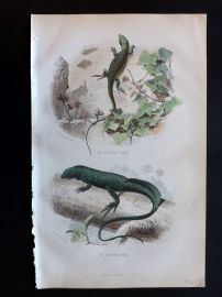 Lacepede & Travies 1881 Hand Col Print. Green Lizard, Port-Cree
